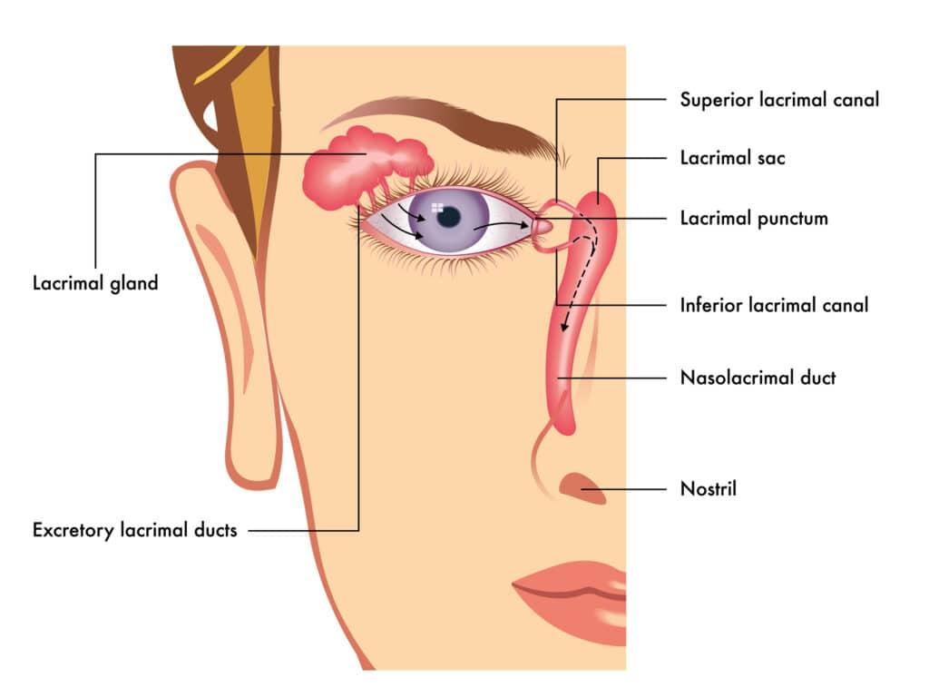 אופטיקה יפעת מומחית במתן פתרונות ראיה מתקדמים ללקויות ראיה מסוגים שונים